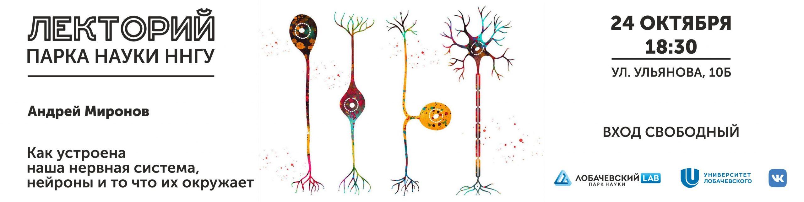 Лекция Андрея Миронова «Как устроена наша нервная система, нейроны и то что их окружает»